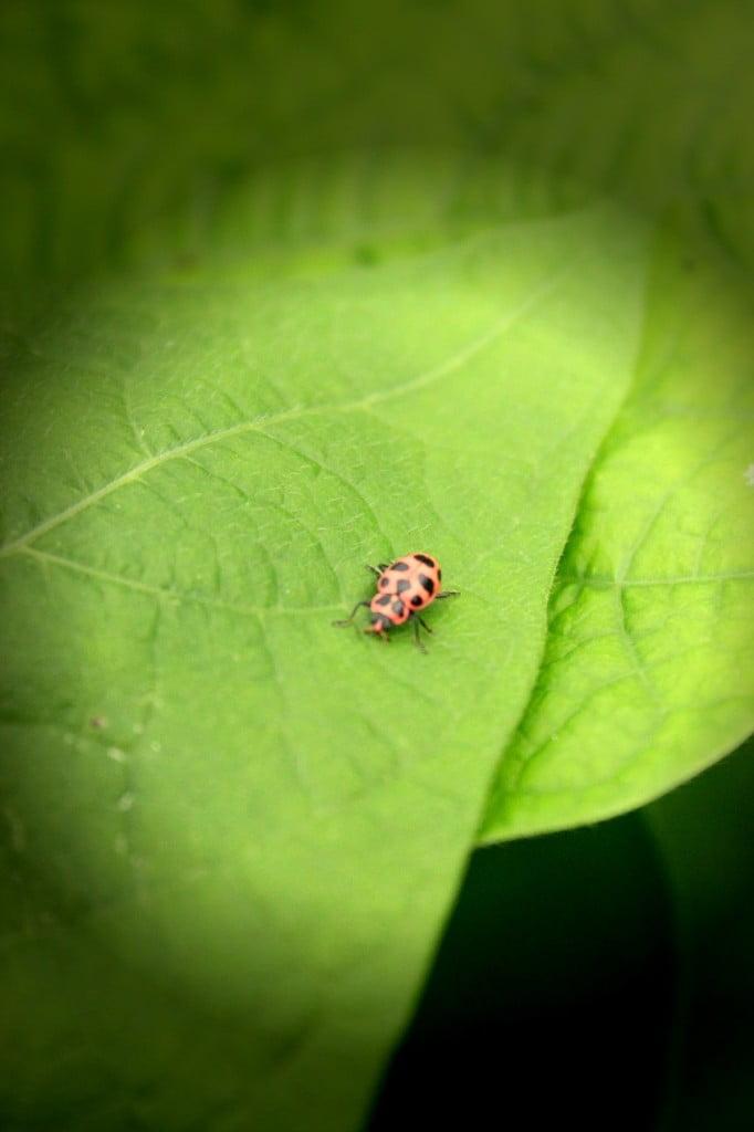 littlebuggie