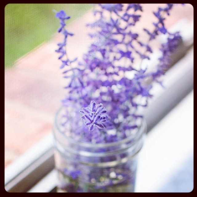 Lavender is my most favorite flower and fragrance. #flowers #natural #naturalbeauty #nature #lavender