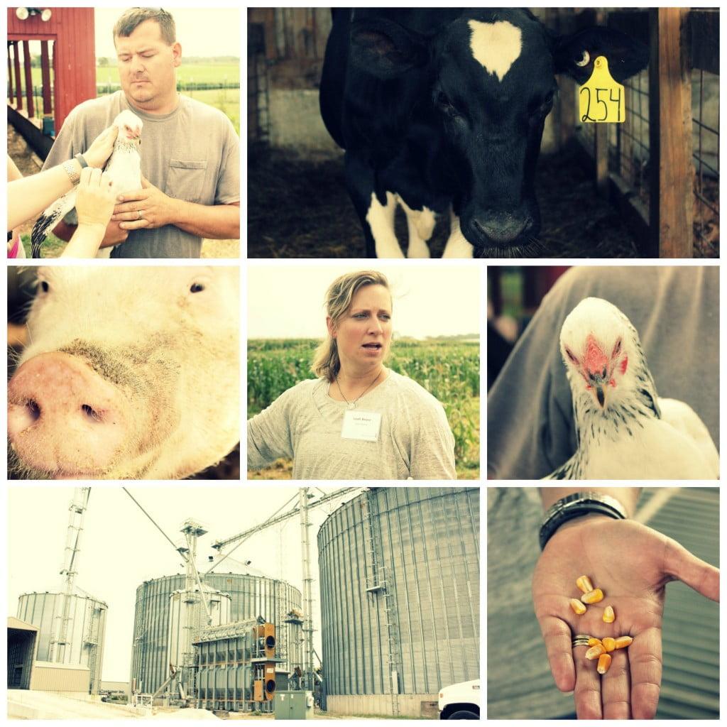 farm-collage